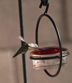 """Love this """"Love Hummingbirds?  We do too :) You'll love this Best Small Hanging Hummingbird Feeder.     It Attracts Hummers Like Crazy and its the perfect gift idea for moms, grandmas, women, hummingbird lovers or even yourself :)    #hummingbird #hummingbirds #hummingbirdfeeder #hummingbirdgifts #WeLoveHummingbirds Glass Hummingbird Feeders, Humming Bird Feeders, Squirrel Proof Bird Feeders, Cherry Valley, Like Crazy, Hummer, Hummingbirds, Metal, Outdoor Decor"""