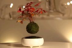 Air Bonsai, a magnetically floating bonsai tree kit, may be the most Kickstarter-esque project ever