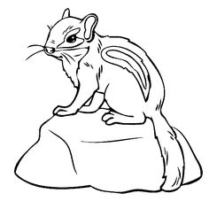 baby chipmunk coloring page - Realistic Chipmunk Coloring Pages