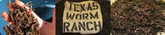 Texas Worm Ranch : buy red wiggler in Dallas, TX Red Wigglers, Composting At Home, Worms, Dallas, Ranch, Texas, Guest Ranch, Texas Travel