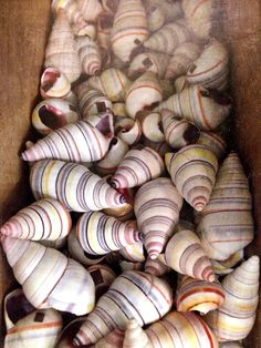 candy colored ribbon striped snailshells - @Wildthorne on Instagram