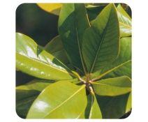 Aceite Esencial Naranjo Amargo 10 Ml. Pranarom