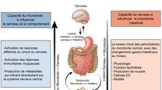 axe cerveau intestin