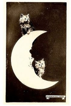kittens on a paper moon