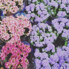 Bom dia! #imaginarqui #flores #flowers #decoracao #dicasdedecoracao