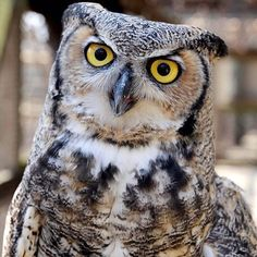 """""""An animal's eyes have the power to speak great language. Martin Buber, Cute Little Animals, All Pictures, Language, Birds, Bear, Eyes, Iphone Wallpapers, Naturaleza"""