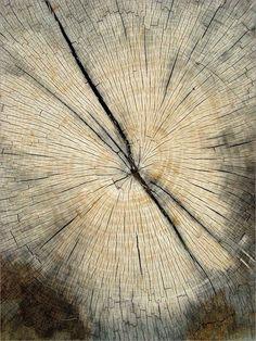 Textura natural compuesta por motivos lineales radiales y concéntricas.