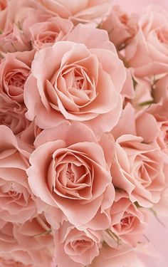 Gorgeous Roses Love Rose, My Flower, Pretty Flowers, Pink Flowers, Bouquet Flowers, Ps Wallpaper, Flower Wallpaper, Peach Aesthetic, Beautiful Roses