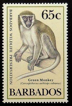 Ceropithecus aethiops sabaeus ,Green Monkey  -Barbados post stamp