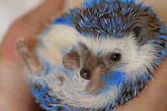 Hedgehogs are so cute!♥