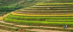 Rice terraces in Mu Cang Chai - Ku Bao Chay North Vietnam, Rice Terraces, Bus Tickets, Bus Travel, Historical Monuments, Places Of Interest, Best Sites, Hanoi, City