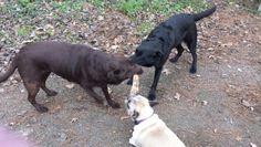 3 happy dogs
