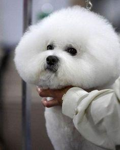 Look My Soft Hair
