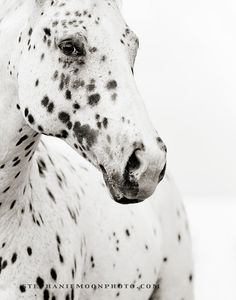 Black and White Horse Photography 11x14 Fine Art by stephaniemoon, $32.00