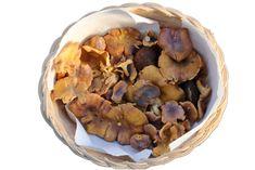 Dog Food Recipes, Stuffed Mushrooms, Vegetables, Alcohol, Stuff Mushrooms, Dog Recipes, Vegetable Recipes, Veggies
