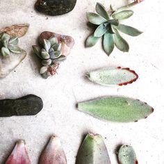 Compañía Botánica Propagating Succulents, Succulent Gardening, Planting Succulents, Planting Flowers, Suculentas Interior, Plant Lessons, Inside Plants, Concrete Garden, Cactus Y Suculentas