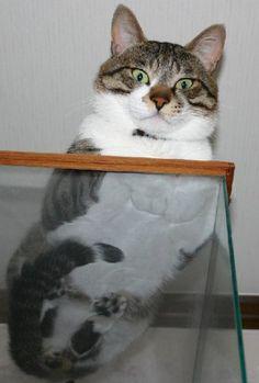 下からみた猫13