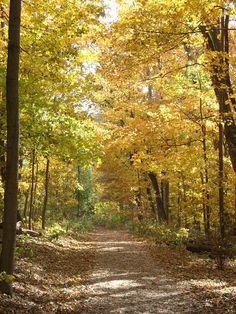 Fall at The Cincinnati Nature Center