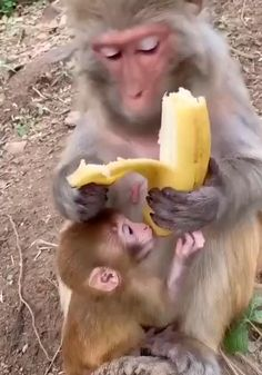 Cute Little Animals, Cute Funny Animals, Cute Cats, Tiny Baby Animals, Funny Monkeys, Big Cats, Cute Animal Videos, Funny Animal Pictures, Baby Animals Pictures