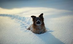 """hey human. it's called a """"snow shovel"""". get one!"""