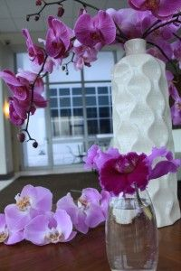 Pink purple phalenopsis orchid flowers