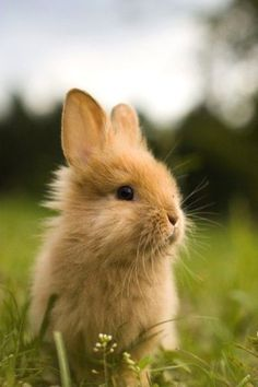 Perky rabbit