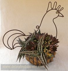 """The succulents in this wrought iron chicken arrangement were chosen to look like feathers. A surprising number do…like watch-chain crassula, for example. We agreed that Aloe variegata (which has the appropriate common name """"partridge breast aloe"""") was perfect, and positioned several of the plants in the container so they'd suggest wings. Bonnie Barabas has chickens, so she selected the filler plants.She chose Echeveria 'Black Prince' and Crassula 'Baby's Necklace'."""