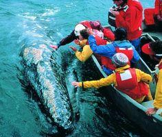 Oceanic Society Farallon Islands Whale Watching