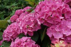 Pflanzen im Garten #pflanzen #blumen #garten #flowers #plants #garden #pics #royaltyfree