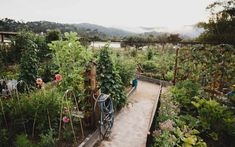 Discover the Secret to Happiness: 5 Tips for Cultivating Joy (and a Spring Garden)