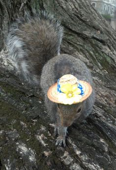 Well, I'm off to tend my flower garden! - Sneezy The Penn State Squirrel