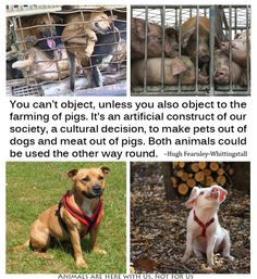 Stop the Horrific Slaughter of Dogs for Leather http://forcechange.com/137384/stop-the-horrific-slaughter-of-dogs-for-leather/#14224806987992&action=expand_widget&id=92820