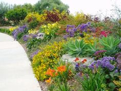 This Mediterranean style landscape is drought tolerant yet colorful