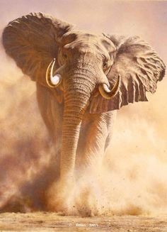 RUSH -Brian Jarvi Artwork Limited Edition Reproductions of African Wildlife Artist Brian Jarvi - Limited Edition Reproductions Brian Jarvi Photo Elephant, Bull Elephant, Elephant Pictures, Elephants Photos, Save The Elephants, Elephant Love, Animal Pictures, Elephant Images, Elephant Gifts
