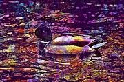 "New artwork for sale! - "" Duck Water Bird Poultry Plumage  by PixBreak Art "" - http://ift.tt/2i1FfX5"