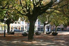 Chestnut trees, Kastanjeplein Amsterdam, The Netherlands. Photo: Pasjoesja.