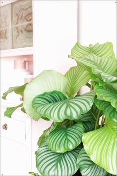 MY ATTIC for vtwonen / greens / plants on pink Cool Plants, Green Plants, Tropical Plants, Tropical Leaves, Plant Art, Plant Decor, Trees To Plant, Plant Leaves, Botanical Interior