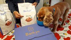 COME SCEGLIERE LE GIUSTE CROCCHETTE PER IL TUO CANE - Sheila the Dog Paper Shopping Bag, Dogs, Pet Dogs, Doggies