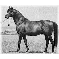 WITRAZ-My horse's ancestor