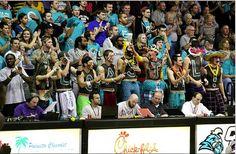 38a1b5a6176de7 Coastal Carolina Chanticleers Fans Buzzer, School Spirit, Coastal, High  School, Fans,