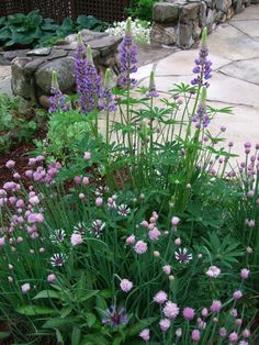 Lupines & Chive Blossoms!  ALthough Chives are SO aggressive = put them in a container.