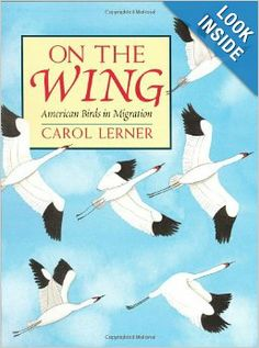 On the Wing: American Birds in Migration: Carol Lerner: 9780688166496: Amazon.com: Books