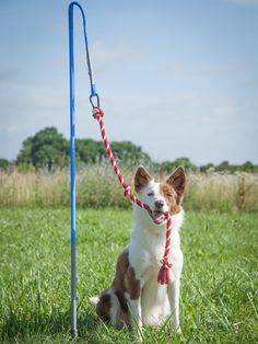 The Interactive Tether Toy is the perfect way to keep your dog entertained outdoors. Rope attachment and hours of fun included! Buy your pup one today!