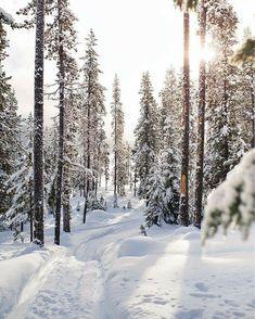 Winter Szenen, Winter Love, Winter Magic, Winter Is Coming, Winter Beauty, Winter Pictures, Christmas Aesthetic, Winter Photography, Winter Landscape