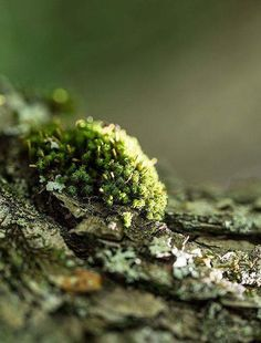 moss and lichen Ari Weinkle Photography Forest Path, Forest Floor, All Nature, Walk In The Woods, Fungi, Shades Of Green, Nature Photography, Stuffed Mushrooms, Scenery