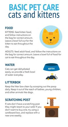 First time cat owner? Check out this guide on how to provide basic care for your new cat or kitten.