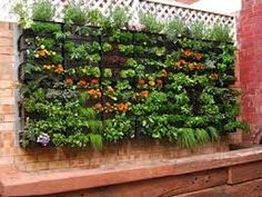 Edible Walls - herbs and edible flowers in a basement setting, maintained and cut regularly throughout summer
