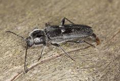 10 aprócska lény, ami mind megbújhat a lakásodban - Otthon | Femina Diy Pest Control, Bug Control, Garden Solutions, Pest Solutions, Bug Identification, Ant Problem, Protecting Your Home, Play Houses, Insects