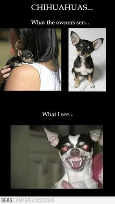 One of the most horrifying things of my childhood was a neighbor's Chihuahua named Fluffy...