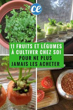 Organic-Légumes-Brocolis Fiesta F1-10 graines-Paquet économique